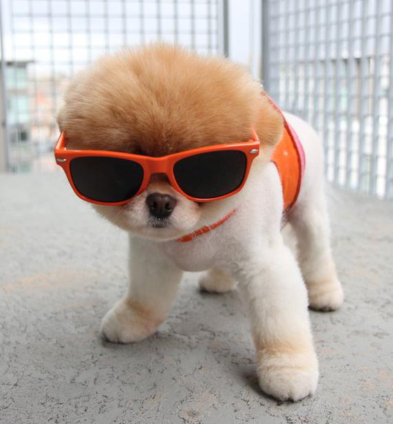 הכלב הכי אופנתי בעולם - בו | צילום מסך